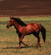 В Зоологическом музее МГУ представлена выставка «Лошадь в культуре степных народов Евразии»